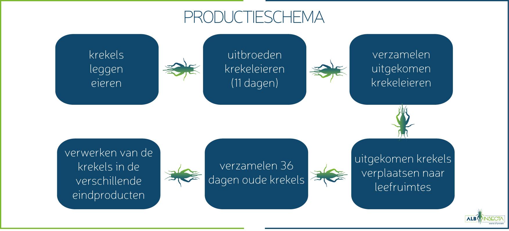 productieschema